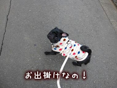 2009_12_13_004