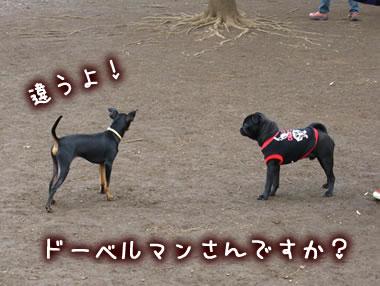 2009_12_13_040