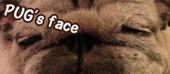 Pugsface